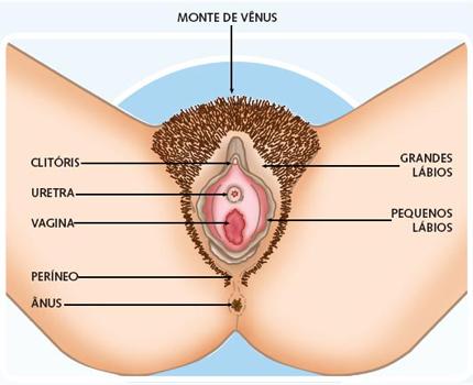 ilustracao-vagina-clitoris